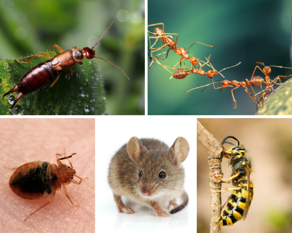 common-pests-image